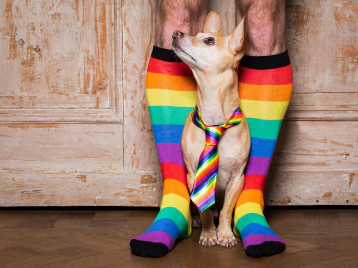 Could Your Pet Have Better Judgment Than an AI Dating App?